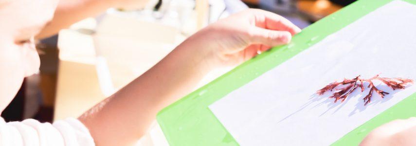 Workshop Infantil: Construção de Algários